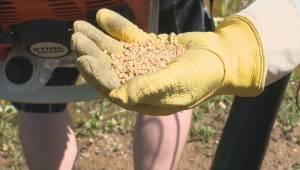 Mosquito season starts early in south Okanagan