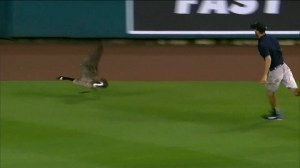 Canada goose chased by Comerica Park ground staff after flying onto field, later flies into scoreboard