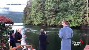 Humpback whales put on spectacular show for Port Hardy lodge guests