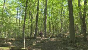 West Island mayors celebrate steps to protect Angell Woods