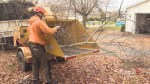 New Brunswick arborists on non-stop work schedule as a result of storm