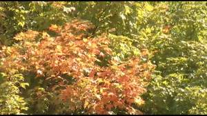 Details on your Fall forecast for Peterborough area