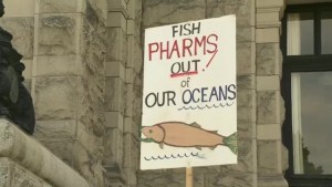 Changes coming to B.C. fish farms