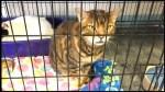Humane Society of Kawartha Lakes is at capacity and seeks pet adopters