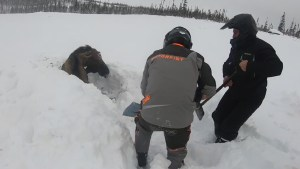 Moose buried neck-deep in snow rescued by Newfoundland snowmobilers