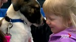 Home show helps rescue dogs find new homes: 'Fall in love with the perfect puppy!'