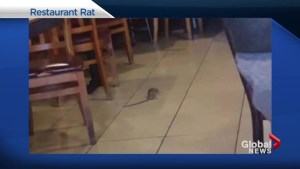 Restaurant rat prompts owner to offer customers a discount