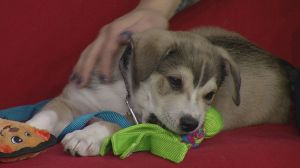 Adopt a Pet: Brian the pup needs a home