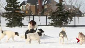 Lethbridge County Women battles county to keep dogs