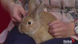 Adopt a Pet: Puff Pastry the rabbit looking for a home