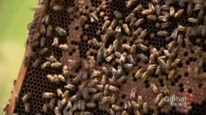 Officials call this the worst year in the history of beekeeping in Saskatchewan