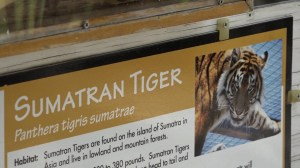 Topeka Zoo director says employee in stable condition after tiger attack, says animal won't be euthanized