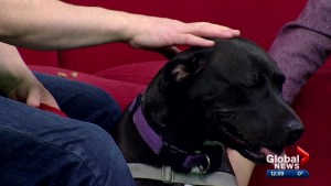Calgary Humane Society Pet of the Week: Halo