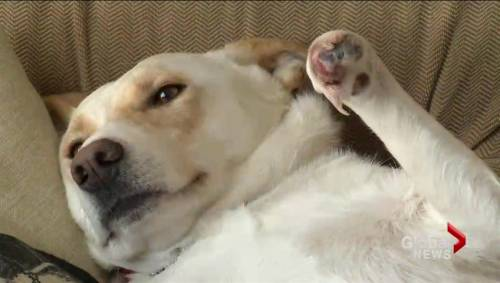 Non-profit group CC RezQs trying to help with stray dog