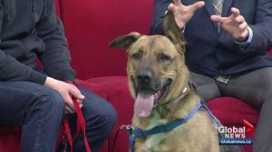 Pet of the Week: Moguli