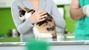 Dublin vet hiring a cat cuddler with a 'cattitude'