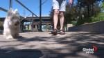 No more dogs on Sainte-Anne-de-Bellevue boardwalk?