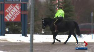 Four-legged partner helps Strathcona County RCMP bring human face to policing