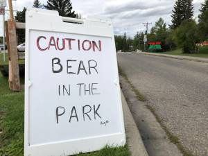 Bear sightings in Bowness spark concern