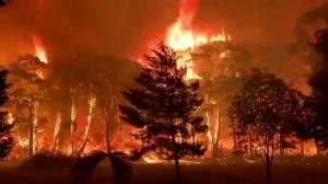 'Crowning' bushfire rips through treetops in Australia as blazes continue across country