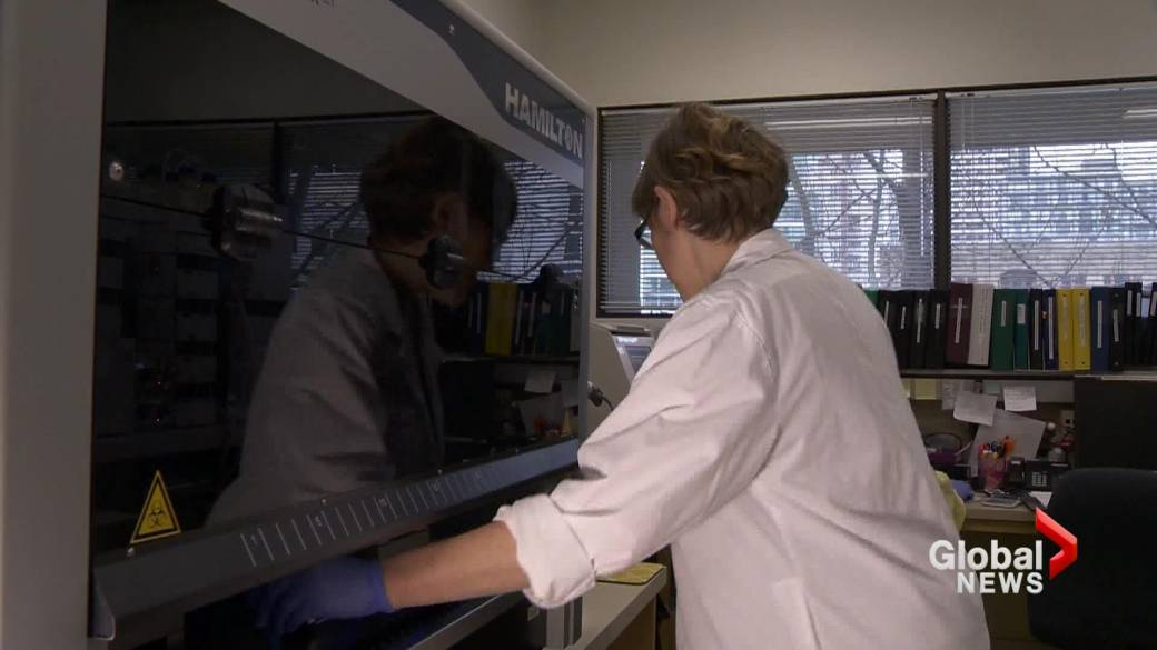 Click to play video: 'University of Lethbridge researchers working on 'promising' treatment for Alzheimer's'
