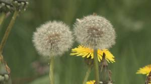 Health Matters: Allergy Symptoms (03:53)