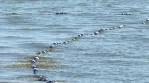 Lake water advisories leaves some Alberta campers steering clear of taking a swim