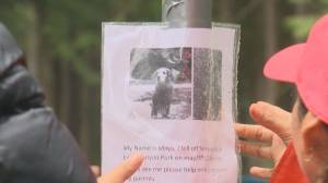 Search continues for dog swept over waterfall at Lynn Canyon