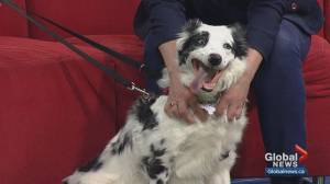 Calgary Humane Society Pet of the Week: Molly