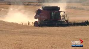 Poor weather conditions causing problems for central Alberta farmers