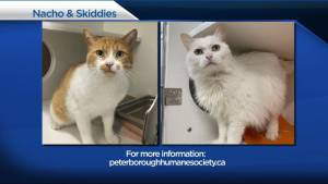 Global Peterborough's Shelter Pet Project for July 23, 2021 (02:14)