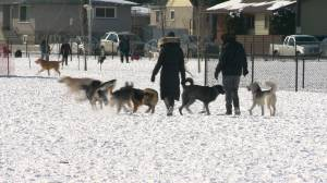 City of Edmonton restricts dog park access, dealing with homeless loitering on transit