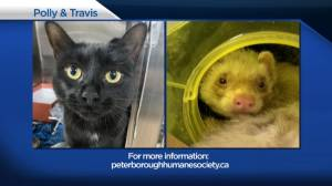 Global Peterborough's Shelter Pet Project for May 14, 2021 (02:14)