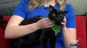 Calgary Animal Services Pet of the Week: Wellington