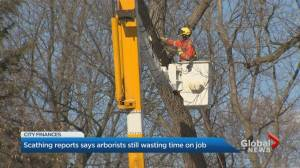 Officials at Toronto city hall push for tree maintenance changes after 2nd auditor general report (02:31)
