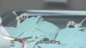 Edmonton Humane Society holds trap-neuter-return clinic (01:53)