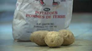 Dry summer hammers potato farmers on Prince Edward Island (02:09)