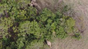 Elephant herd moving through China's Yunnan Province prompts some evacuations (00:35)