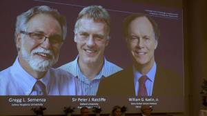 Three scientists awarded Nobel Medicine Prize for learning how cells use oxygen