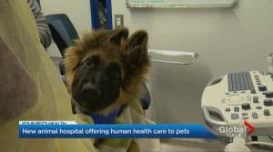 New specialty hospital in Toronto offers human-like health care for your pets