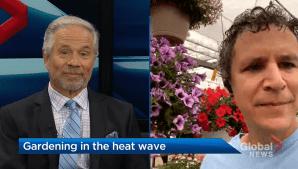 Gardening tips following Edmonton's major heat wave (04:20)