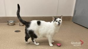 Adopt a Pet: Zoe the cat (04:02)