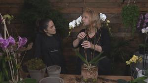 GardenWorks: Orchid 101