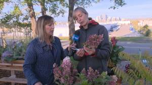 Spruce It Up Patio: harvesting your Hydrangeas