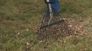 Don't rake your leaves, experts say