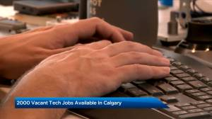 Calgary seeking to fill 2,000 vacant tech jobs: CED (02:08)