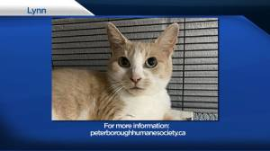 Global Peterborough's Shelter Pet Project for July 16, 2021 (02:03)