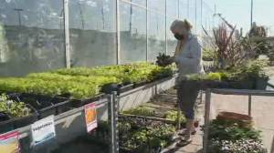 Durham Region green thumbs gear up for long weekend planting (01:47)