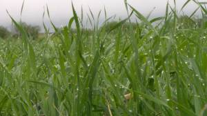 Rainy Victoria Day in Saskatchewan welcomed by many (02:00)