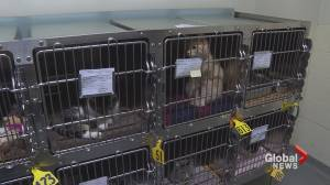 City of Calgary, AARCS host adoption events as animal shelters face overcrowding